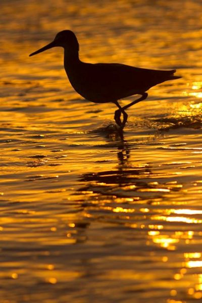 Shorebird at Sunset, photographed by Don Baccus
