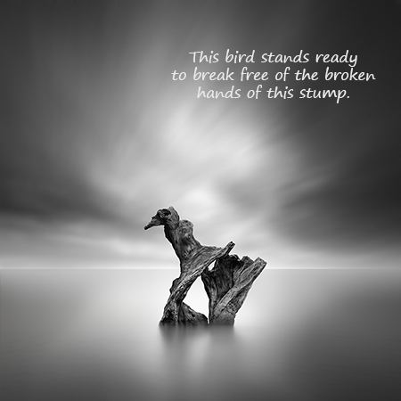 This bird stands ready: haiga (photograph and poem) by George Digalakis and Gary S. Rosin