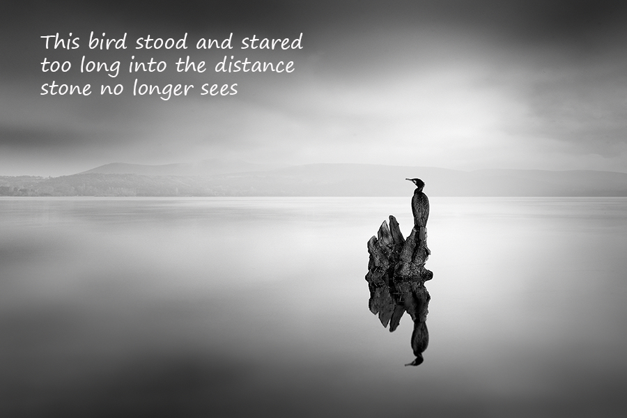 This bird stood and stared: haiga by George Digalakis and Gary S. Rosin
