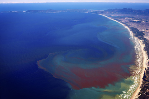 Photograph: Toxic Algae Bloom, by ESA (European Space Agency)
