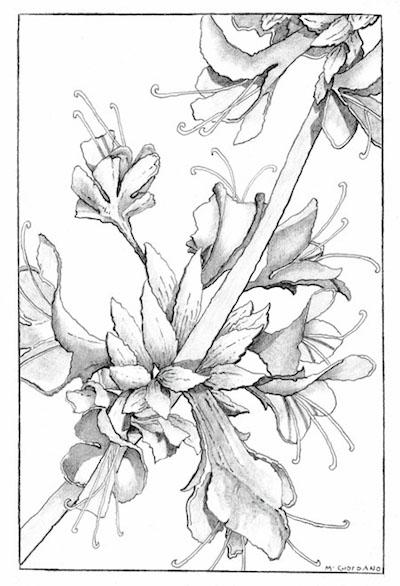 Drawing: Beyond Reach, by Melinda Giordano