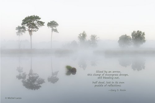Tranquility in White, haiga (art plus poetry) by Michael Lucas and Gary S. Rosin