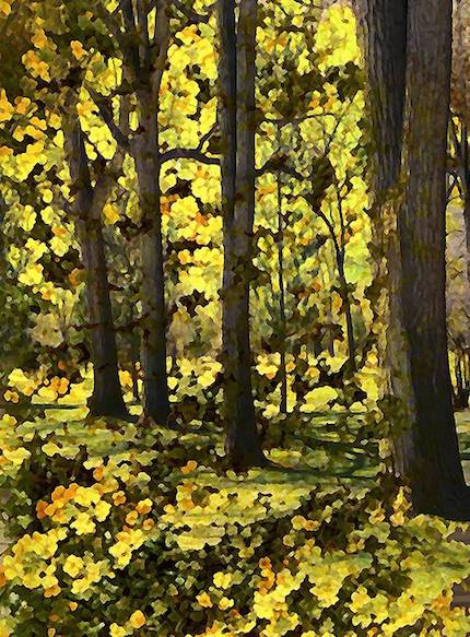 Digital art: [Fall foliage], by An Mayou