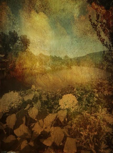 Digital art: [Hydrangeas], by An Mayou