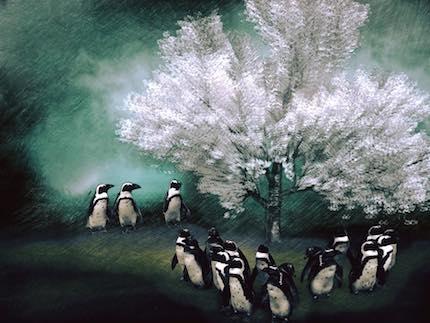 Digital art: [Penguins in bloom], by An Mayou