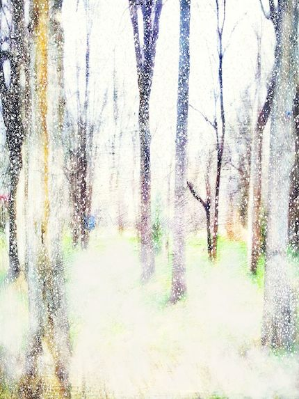 Digital art: [Snow trees], by An Mayou
