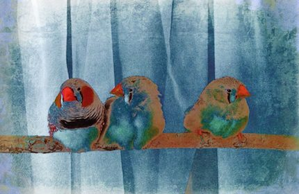 Digital art: [Three finches], by An Mayou