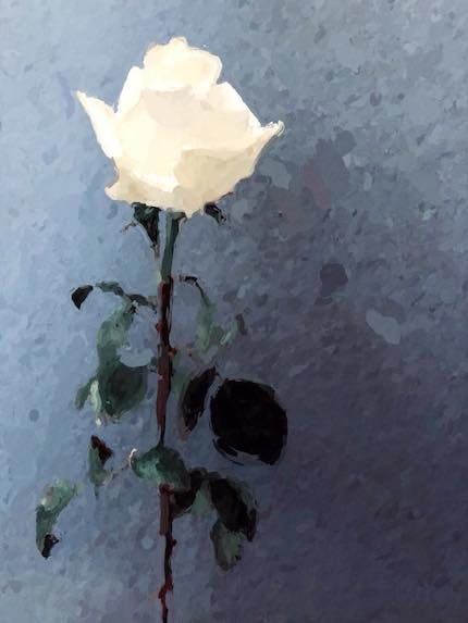 Digital art: [White rose], by An Mayou