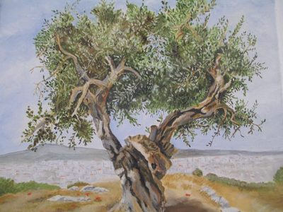 The Wisdom of the Olive Tree, by Frances Melis