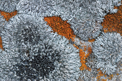 Lichens Growing on Stone, photographed by Ray Rasmussen